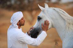 Arabian stallion Dębowiec