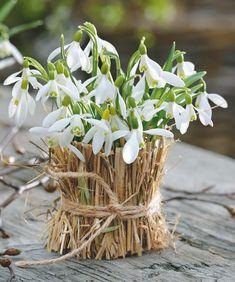 My favorite spring flower Cut Flowers, Spring Flowers, White Flowers, Beautiful Flowers, My Flower, Flower Vases, Flower Power, Pot Pourri, Deco Floral