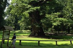 Exclusif ! Interview du plus vieil arbre d'Europe Centrale...