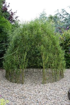Willow Structure- this could be done with crepe myrtle limbs    I THINK THIS IS FABBO. I'M GOING TO TRY AND GROW ONE! WHAT A SHADEY READING NOOK IN THE GARDEN!