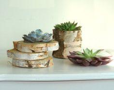 tranches de bouleau à écorce bois coaster disques succulentes rustiques, pièces maîtresses bougie votive titulaire thé léger bouleau écorce stand de mariage