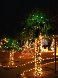 Albuquerque NE Heights home and lit-up Windmill Palm trees