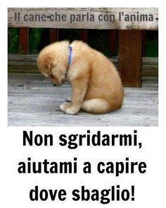 se solo non giudicassero. Animals And Pets, Baby Animals, Cute Animals, I Love Dogs, Cute Dogs, Foto Glamour, Dog Friends, My Best Friend, Dogs And Puppies