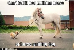 funny horses with captions - Google Search