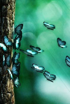everyday a different color, beautiful gifs, soft goth, nature. Butterfly Effect, Butterfly Kisses, Butterfly Flowers, Blue Butterfly, Butterfly Wings, Beautiful Butterflies, Hummingbird Flowers, Nautilus, Pretty Pictures