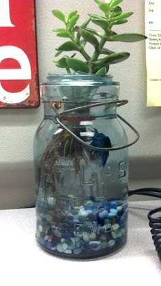 Mason jar aquarium in my cubicle workspace
