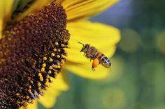 6 x Kunststoff Bienenhaltung Honig Eingang Feeder Biene