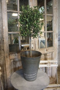 Topiary in Zinc Flower Bucket: spray paint the two buckets baby blue