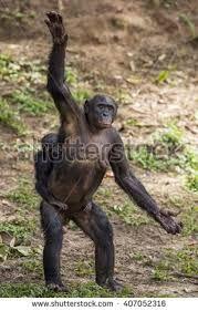 Image result for chimp hand