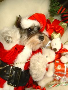 Schnauzer Claus - Yes Laurel and Darya there is  Schnauzer Claus and you thought mummy just made that up.