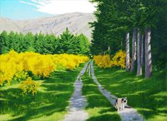 a path of scotch broom