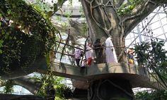 AMWTOUR TRAVEL BLOG: Keren!!! Ada Hutan Tropis Dalam Gedung dengan Poho...