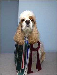 Fidose of Reality:  Changes at Westminster Dog Show for 2014