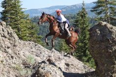 Wait For The Jump: Old Dominion 50 Mile Endurance Ride I: Prep