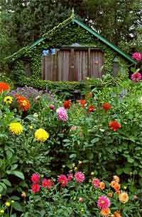 1000 images about wildflower butterfly garden on for Wildflower garden designs