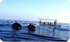 Bali Tour Packages, Dolphin Tours, Bali Holidays, Holiday Activities, Day Tours, Dolphins, Boat, Beautiful, Dinghy