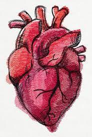 Resultado de imagen para corazon dibujo