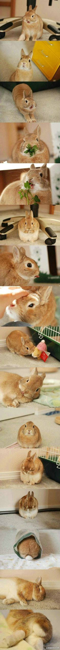 great pics of a bunny and all the cute things it does. I want a bunny now. Funny Bunnies, Baby Bunnies, Cute Bunny, Bunny Pics, Kawaii Bunny, Bunny Rabbits, Animals And Pets, Baby Animals, Funny Animals