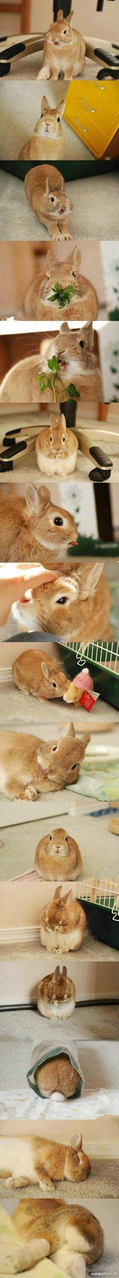 Rabbit, Bunny, Bunnies, Hare, Lapin, Conejo, кролик, Coniglio, Coelho, Kaninchen, 兔, ウサギ,