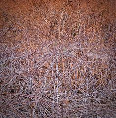 winter garden landscape photography monochromatic plum gold nature photograph