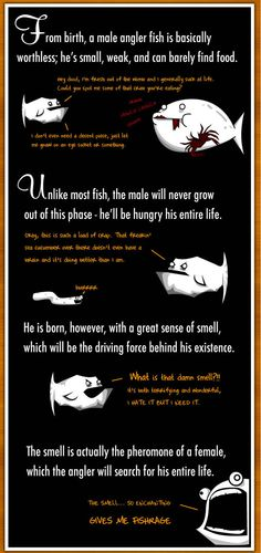 How The Male Angler Fish Gets Completely Screwed - The Oatmeal
