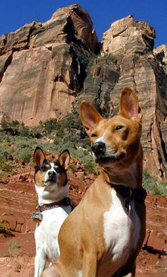 Awesome picture - Basenji Rescue and Transport