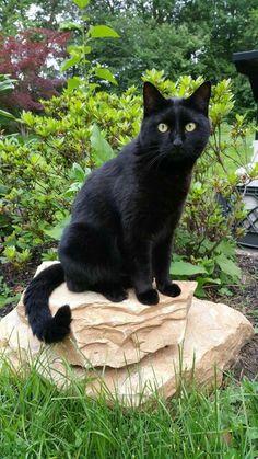 Gato preto não da azar <3