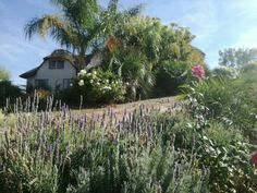 South Africa, Vineyard, Houses, Plants, Outdoor, Homes, Outdoors, Vine Yard, Vineyard Vines