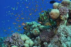 Politics and half-measures failing marine conservation, global study shows