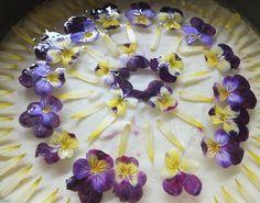 Maddocks Farm Organics Elderflower and viola cheesecake. Recipe at http://maddocksfarmorganics.blogspot.co.uk/2013_05_01_archive.html