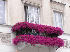 Sacadas e flores - Balconies and flowers