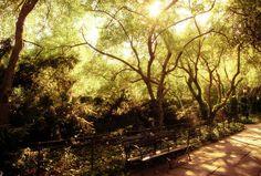 New York City - Central Park.