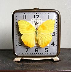 http://www.etsy.com/listing/84872363/real-butterfly-displayed-in-a-vintage?ref=tre-2070304329-16    http://www.etsy.com/treasury/NzI2NTM2OHwyMDcwMzA0MzI5/yearning-for-spring?index=2810