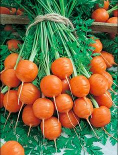 FYI; Parisian carrots. A great little round carrot that is a nineteenth-century French heirloom.