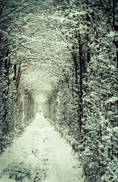 The Tunnel of Love Kleven, Ukraine. in the Snow