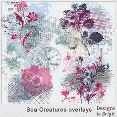 Digital Art :: Element Packs :: Sea Creatures overlays by Designs by Brigit