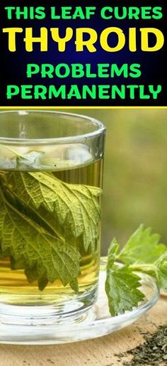 This Leaf Cures Thyroid Problems Permanently! - Health and Remedies Thyroid Cure, Thyroid Diet, Thyroid Health, Thyroid Disease, Thyroid Cancer, Natural Treatments, Natural Remedies, Herbal Remedies, Nettle Leaf Tea