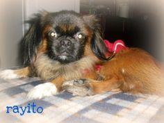 Rayito bebé