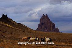 True Adventures Landing page - New Mexico Tourism - Travel & Vacation Guide