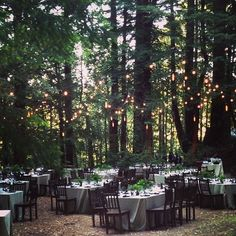 shelter-co: Magical forest dinner tonight. #curiositycamp (via rainydaysandblankets) except w round tables