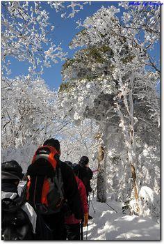 Pure white Hallasan Mountain in winter | Jeju island, Korea