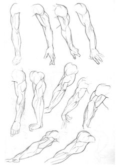 Sketchbook: Arms p. 2 animation - draw anatomy pose gestures, deltoids, triceps, biceps, shoulders, forearms, wrists, & arms radius