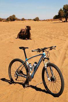 Kreidler, piaski Sahary i wielbłąd . Na zdjęciu model Black Tusk 29 Carbon Team Edition (fot. pochodzi z aktualnej wyprawy (2014) united-cyclists.com