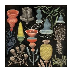 Love this artist, vintage looking, but still modern / Collections of Objects / Collections of Things / Displaying / Vintage / Ideas / Nature / Antique