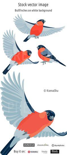 Stock image. Bullfinches on white background #vectorillustration #vector #stock #bird #bullfinch #redbird #flyingbird