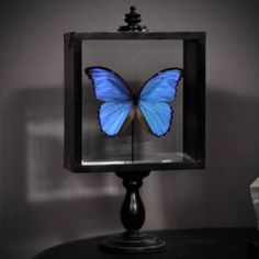 Blauwe vlinder - als ik toch eens rijk was... dan kwam deze vlinder nú naar mij toe :-)