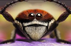 Insects And Bugs | Smile! Close-up Photographs of Insects « Randommization