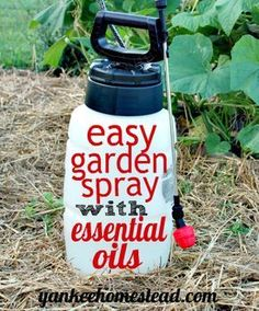 Are you looking for a simple, effective, and chemical-free spray to use in your organic garden? Read on. Hard Core Organic Pest Control It's not easy to avoid both harmful pesticides and harmful insects in the vegetable garden. Take it from someone who has gone to great lengths to keep chemicals out of the garden: We bought […]