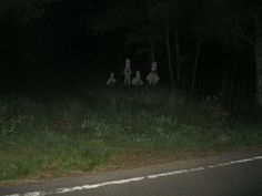 """spookymrsboo:From r/creepy: """"I was driving down a woodsy back road in the mountains when I saw something out the corner of my eye. Images Terrifiantes, Lila Baby, John Wilson, Creepy Pictures, Scary Photos, Ghost Pictures, Southern Gothic, Cursed Images, The Villain"""