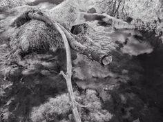 #naturephotography #monochrome #jfdupuis #infrared #style #bw
